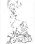 Bambi Online Coloring Pages for girls