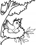 Birds Printable Coloring Pages
