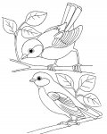 Birds Printable coloring pages online
