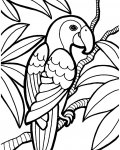 Birds Coloring page template printing