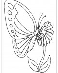 Butterflies Coloring Pages for Kids