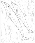 Dolphins Online Coloring Pages for girls