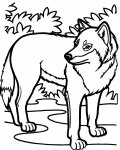Wolves Free Coloring Pages